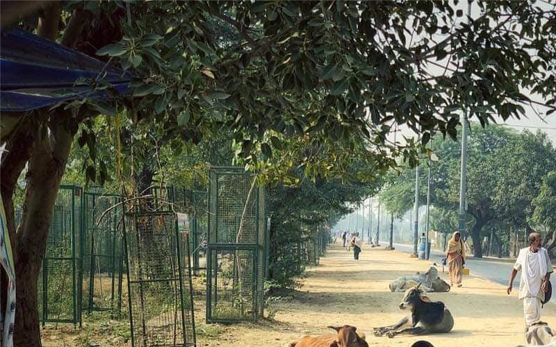 Govardhan Parvat Parikarma