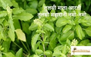 Tulsi Maharani Namo Namo